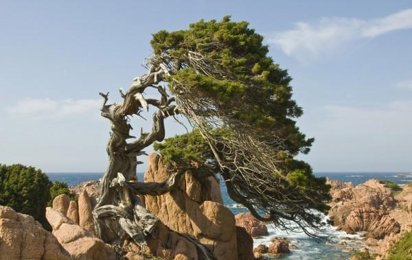 Isola maddalena vacanze in barca e catamarano sardegna for Isola che da il nome a un golfo della sardegna