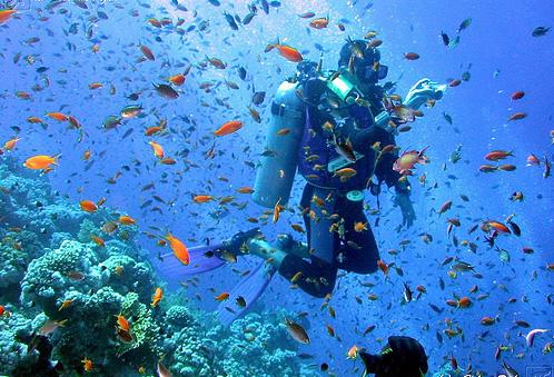 Vela e Diving